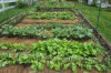Excelsior Community College to launch Backyard Farm on Labour Day...